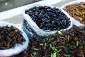 Zucht essbarer Insekten