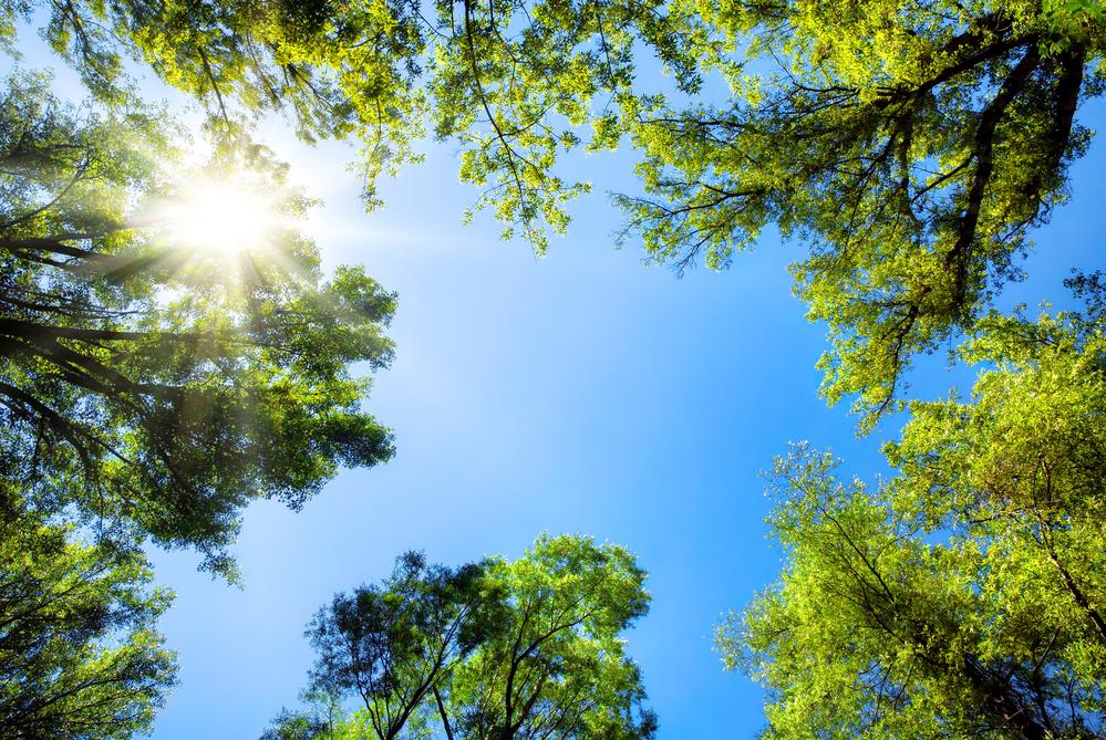 Sonne scheint durch die Baumwipfel